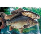 Kaprovité ryby
